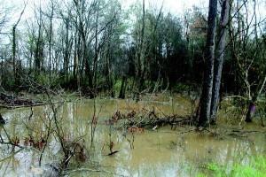 TF&G - SABINE RIVER FLOODING