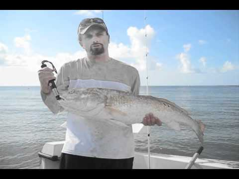 Golden croaker on steroids!? Cool! (Video)