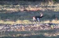 Dept. of Wild: Invade the Blackbuck Antelope's Territory