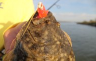 Flounder Run Cancelled? Warm Weather to Blame?