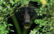 Rural Residents, Hunters in Northeast Texas Advised to Be Bear Aware
