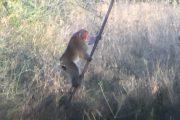 Monkey encounters deer at TX hunter's feeder (photos & more)