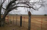 Feral monkeys in Texas? (Photo and video)
