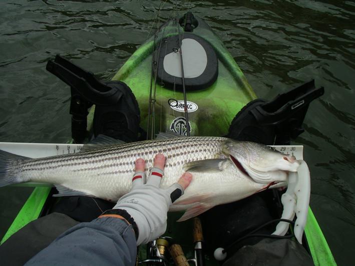 kayak trolling