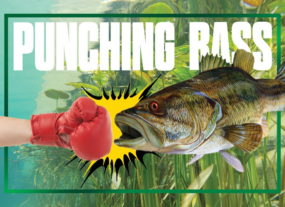 punching bass