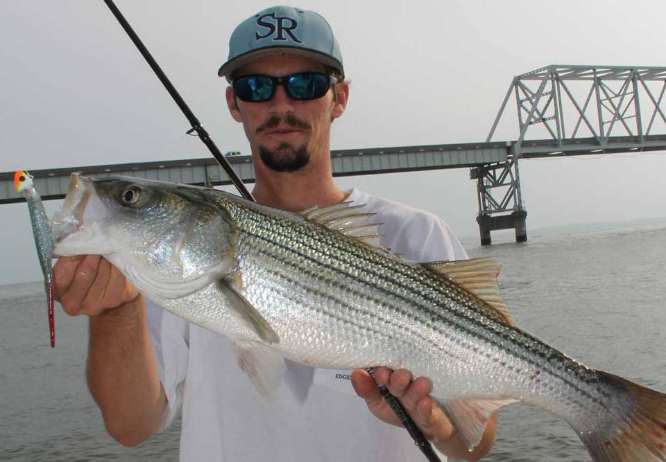 soft plastic lure caught striper