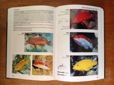 Reef Fish Identification: Florida Caribbean Bahamas 2 page spread.