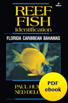Reef Fish ID Caribbean PDF ebook