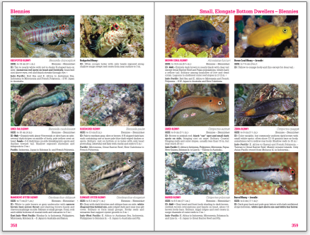Reef Fish Tropical Pacific page spread