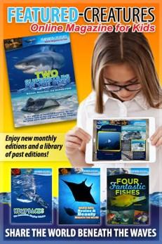 Online Magazine for Kids
