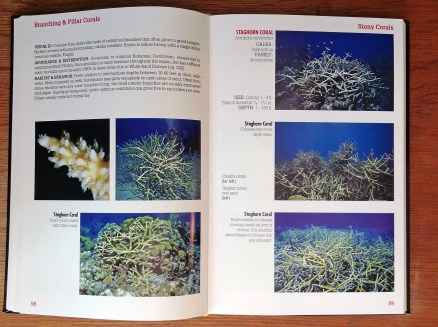 Reef Coral Identification Florida Caribbean Bahamas page spread