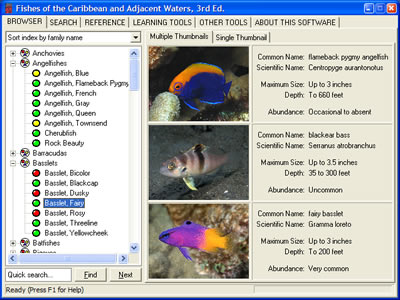 Reef Fish ID DVD screenshot
