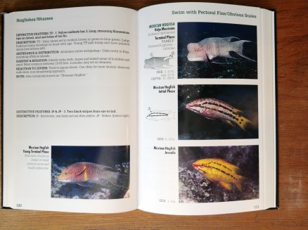 Reef Fish Identification Galapagos page spread