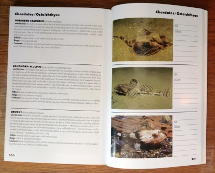Marine Life of the North Atlantic inside page spread 02