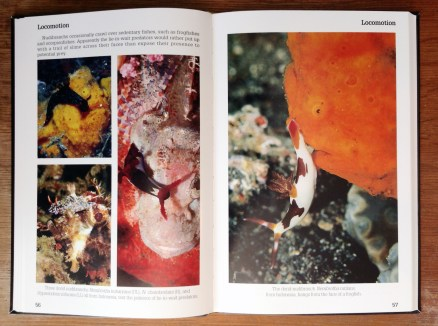 Nudibranch Behavior page spread 02