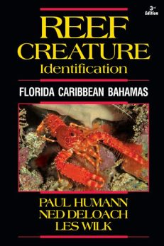 Reef Creature ID Caribbean