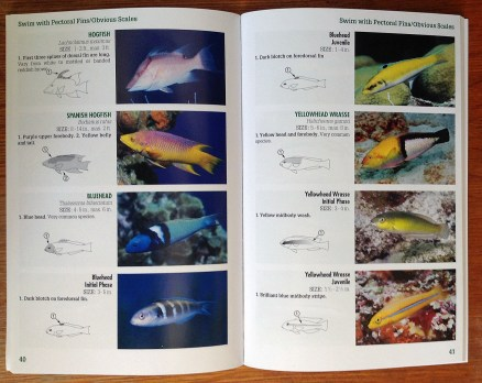 Inside Spread Snorkeling Guide to Marine Life