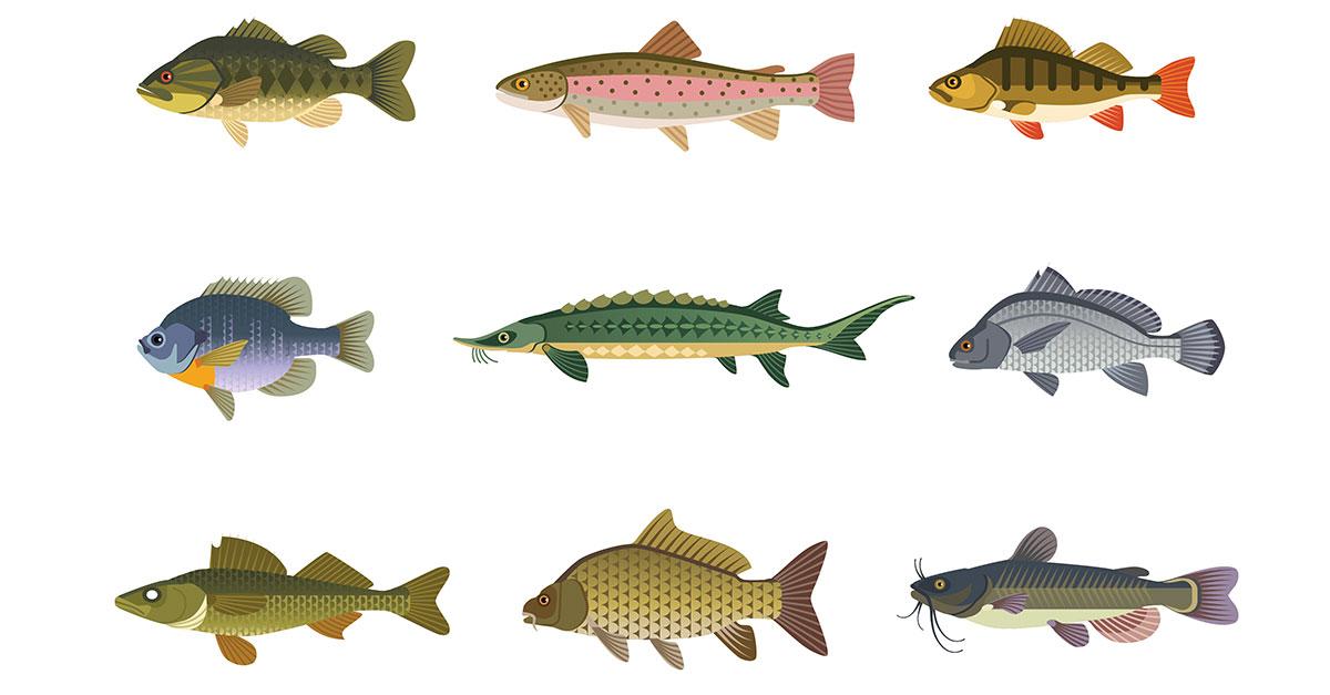 Name That Fish Quiz - Fishing by Boys' Life