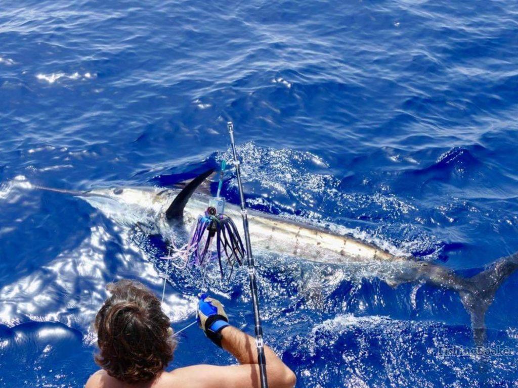 Blue Marlin Release