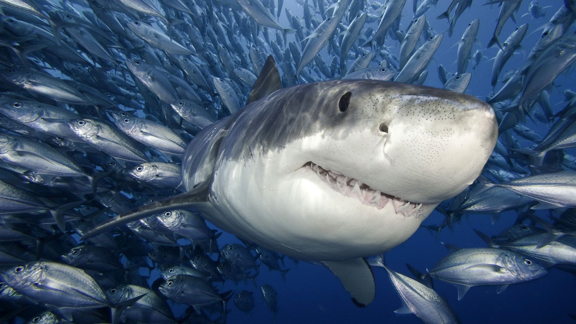 6 Shocking Shark Facts You Never Knew