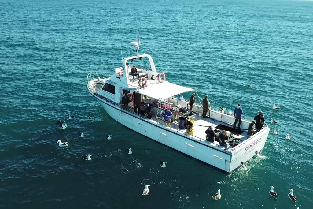 An aerial view of a fishing boat offshore, surrounded with seagulls, with multiple anglers fishing from the boat