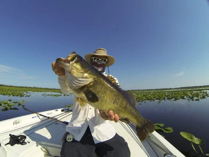An angler in a white shirt and a hat holding a Largemouth Bass with a weed-covered lake in the background