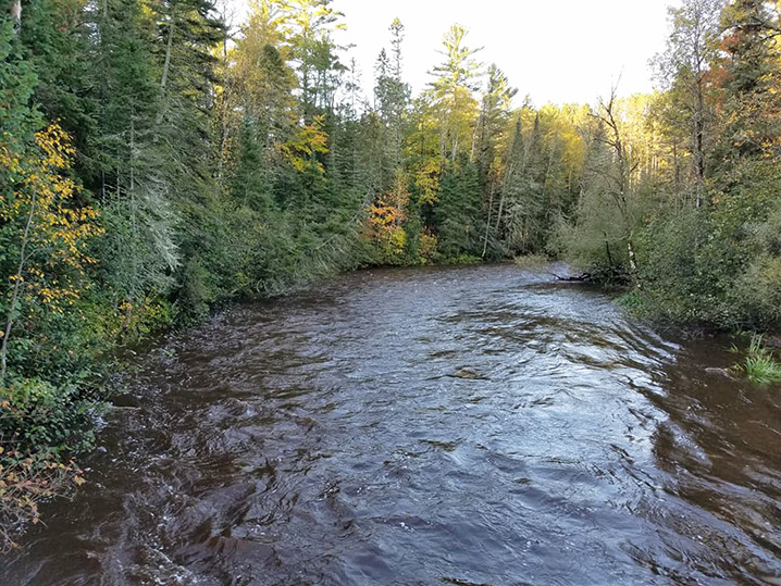 A stream and trees in Minnesota