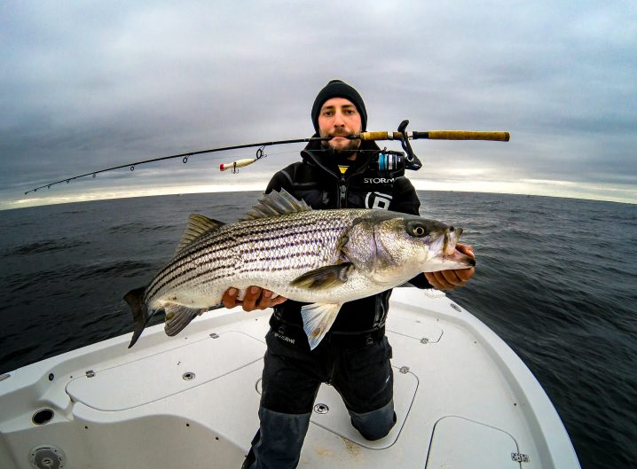 Angler with a spinning rod in his mouth holding a large Striped Bass on a topwater striper fishing trip