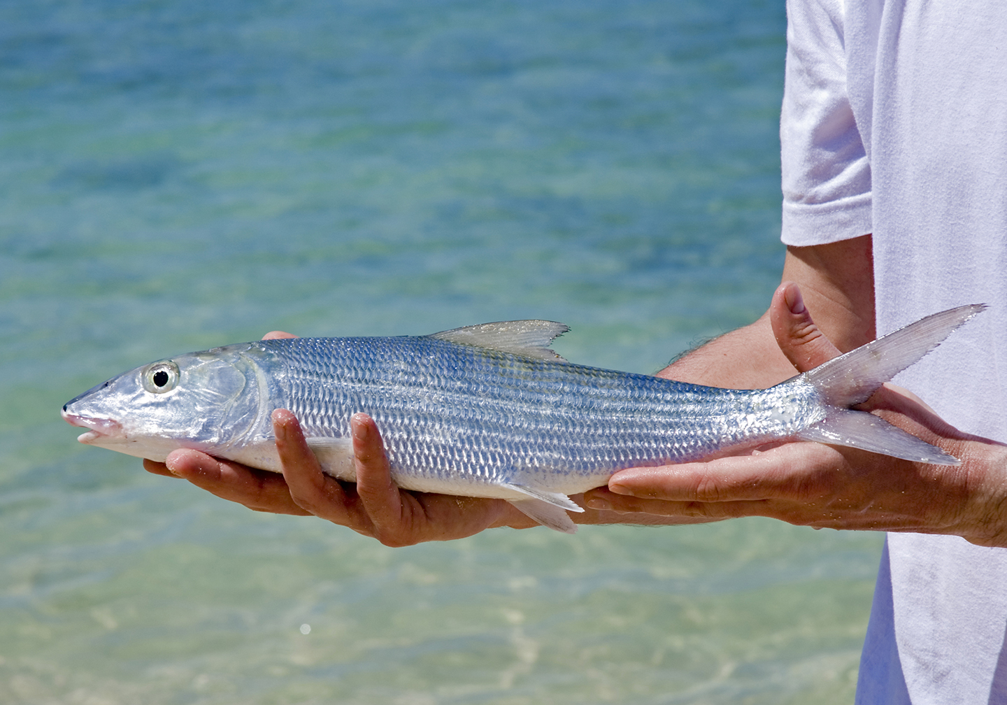 A man holding a Bonefish with shallow water behind him