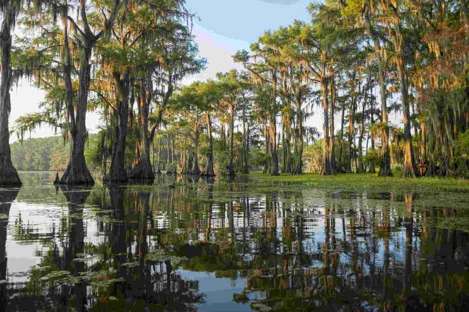 Bayou at Caddo Lake, angler's paradise