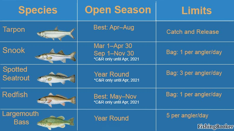 An infographic showing seasonality and bag limits for fish species: Tarpon, Speckled Trout, Redfish, Largemouth Bass, and Snook
