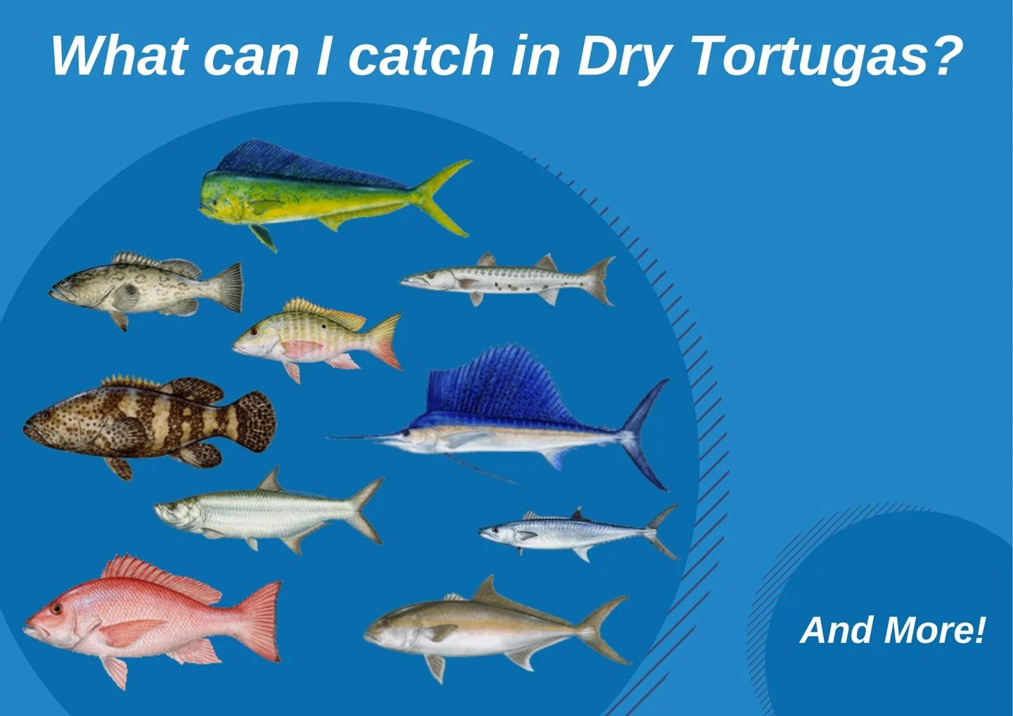 An infographic showing the top fish catches in Dry Tortugas