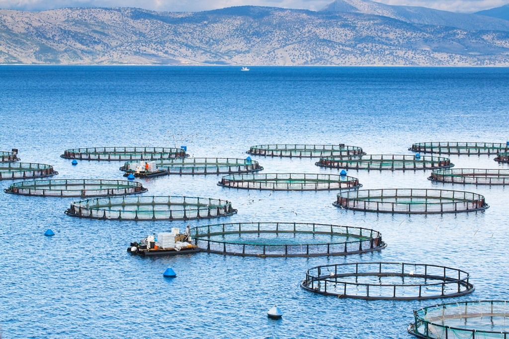 A group of round fish farms floating in the sea with boat and mountains in the distance