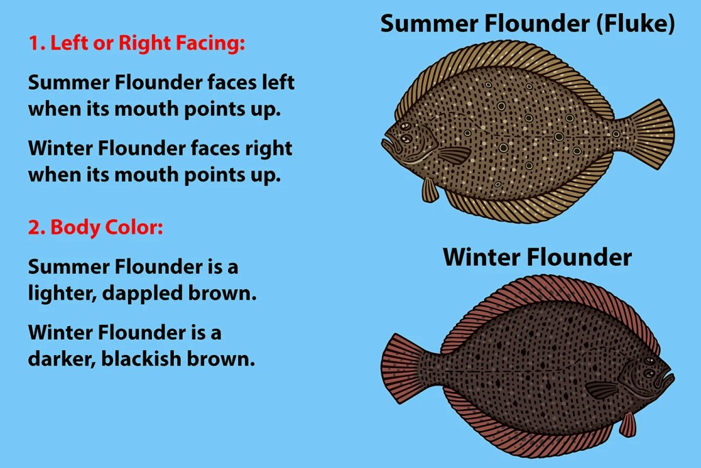 Fluke vs Flounder: All You Need to Know