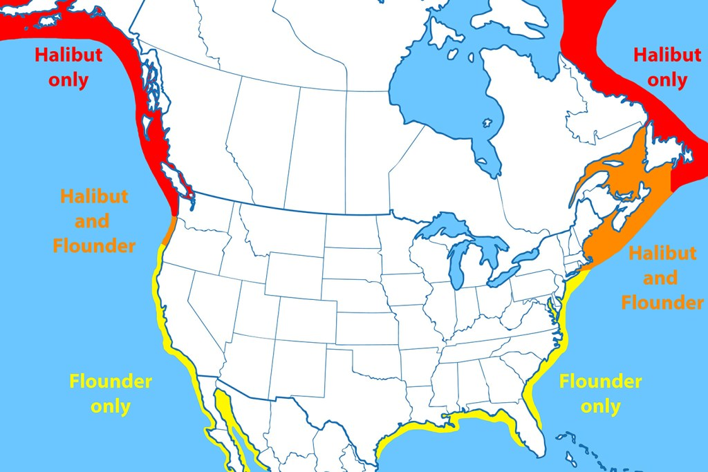 A map showing the distribution of Halibut and Flounder in North America. Waters where only Halibut live are marked in red. Waters where only Flounder live are marked in yellow. Waters where both fish live are marked in orange.