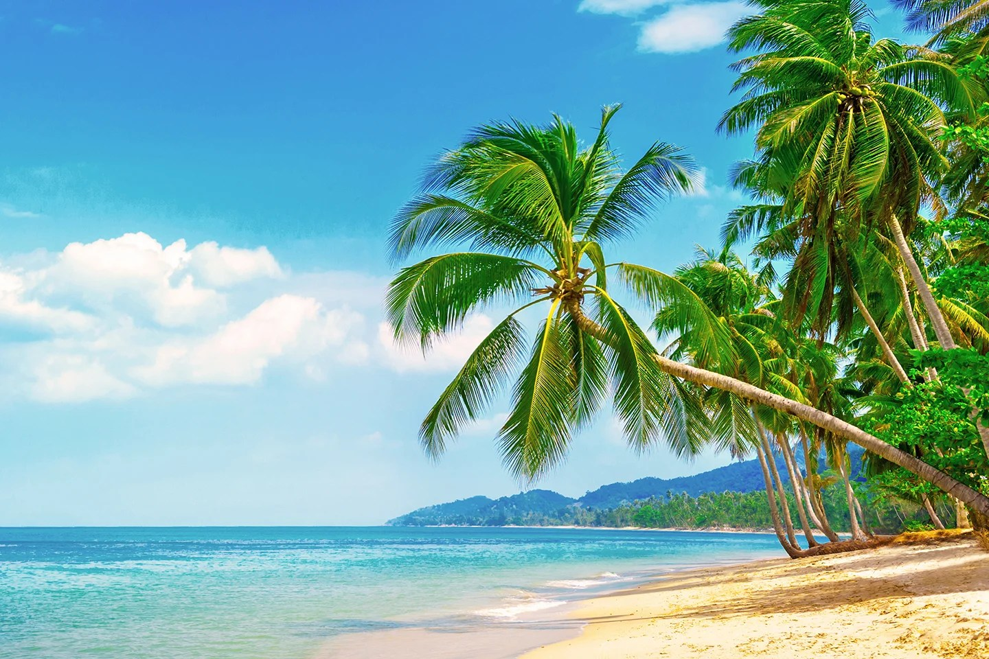 A sunny beach on Hawaii, with palm trees and yellow sand on the right, blue ocean on the left, and mountains in the distance.