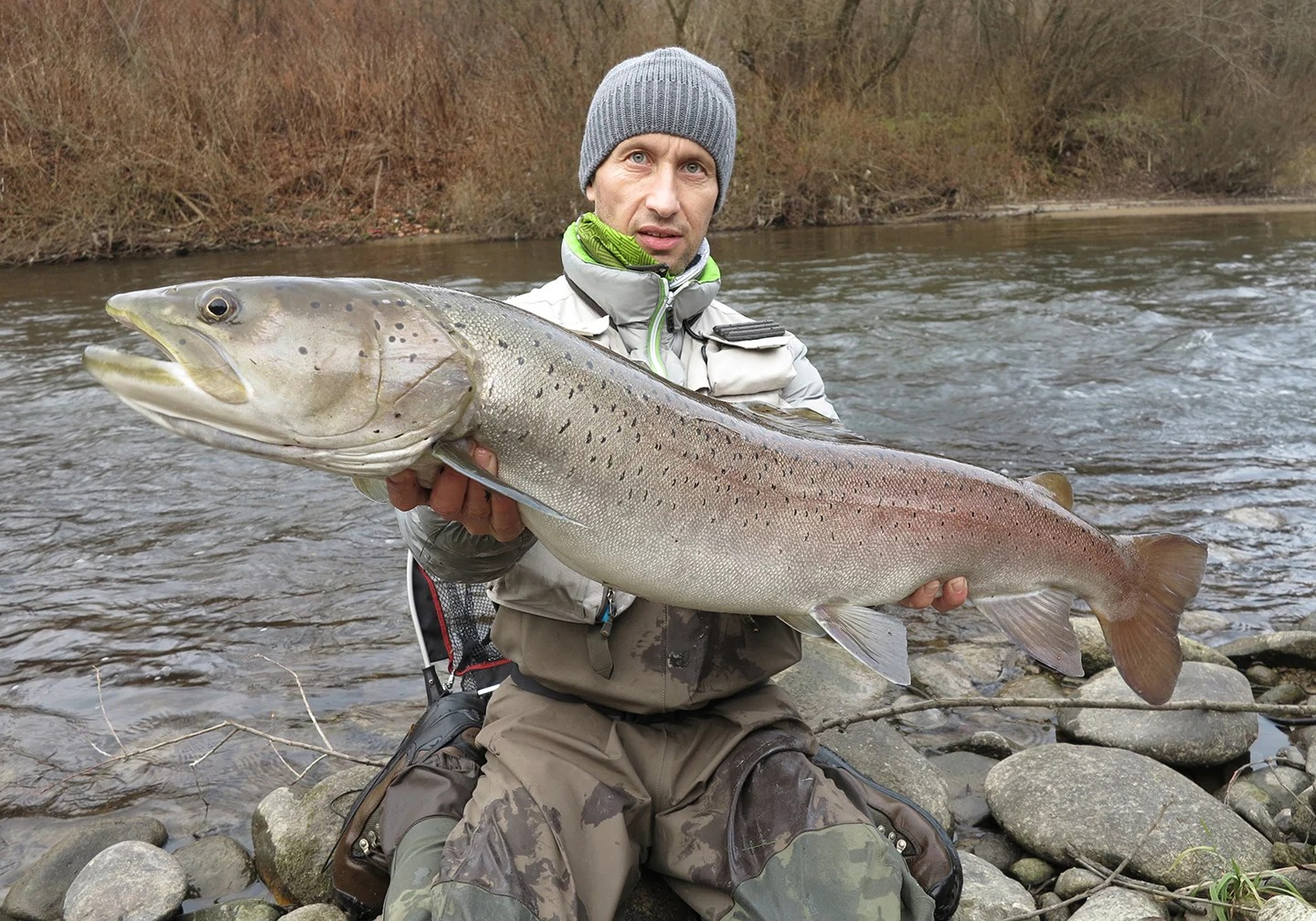 An angler in a winter hat and jacket holding a Huchen, also know as a Danube Salmon, near a river in Slovenia