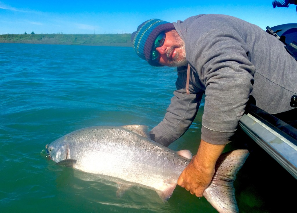 An angler holding a big King Salmon in the water with blue skies in the background