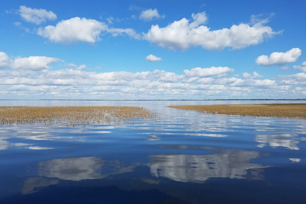 A view of Lake Toho taken from just above the water. Brown grass grows on the surface of the lake and land is visible in the distance. Clouds are reflected on the surface of the water in the foreground.
