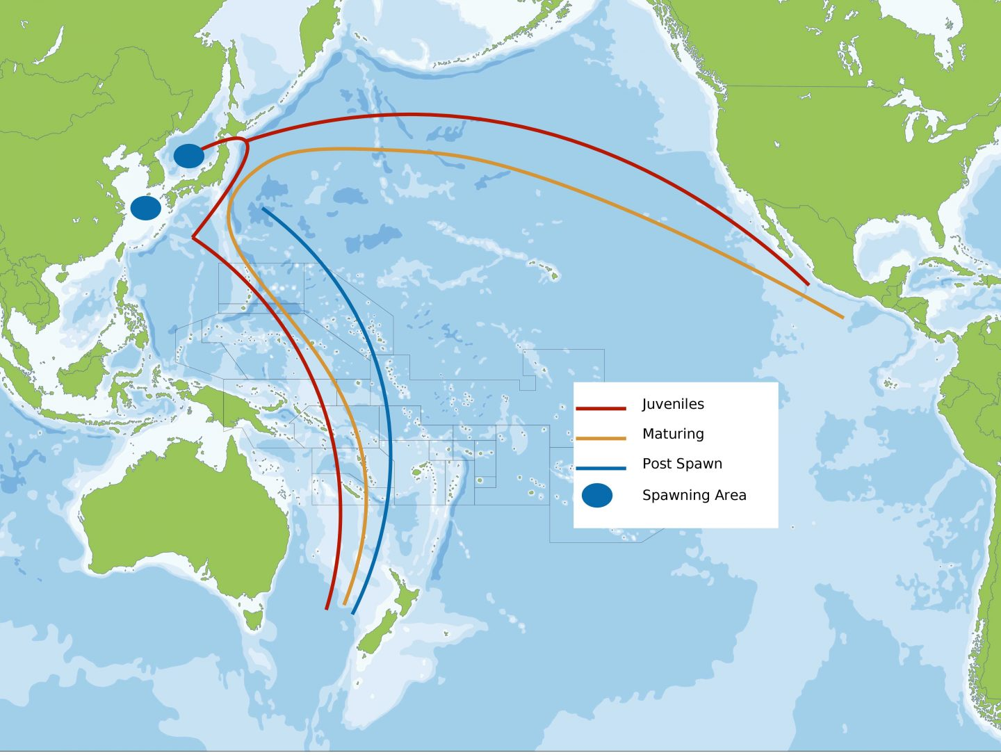 Pacific Bluefin Tuna Migeation and Spawning Map