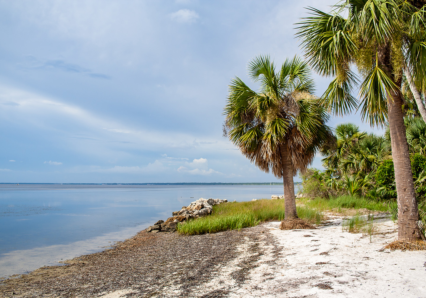 A beach on Florida's Forgotten Coast, with blue sea on the left and palm trees on the right.