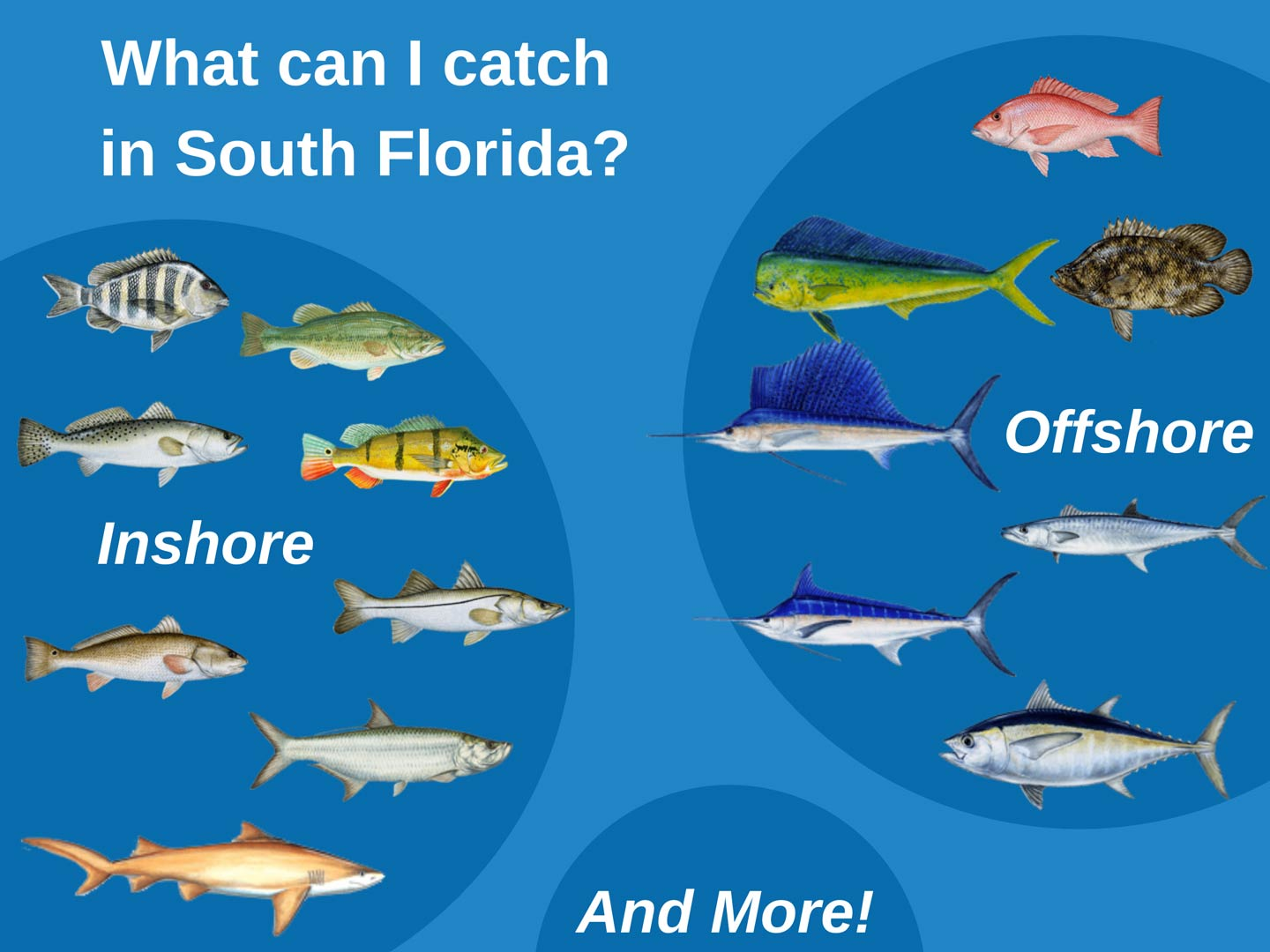 An infographic showing the top fish targets in South Florida, including Snook, Tarpon, Redfish, Trout, Largemouth Bass, Red Snapper, Grouper, Mahi, Marlin, Sailfish, and more
