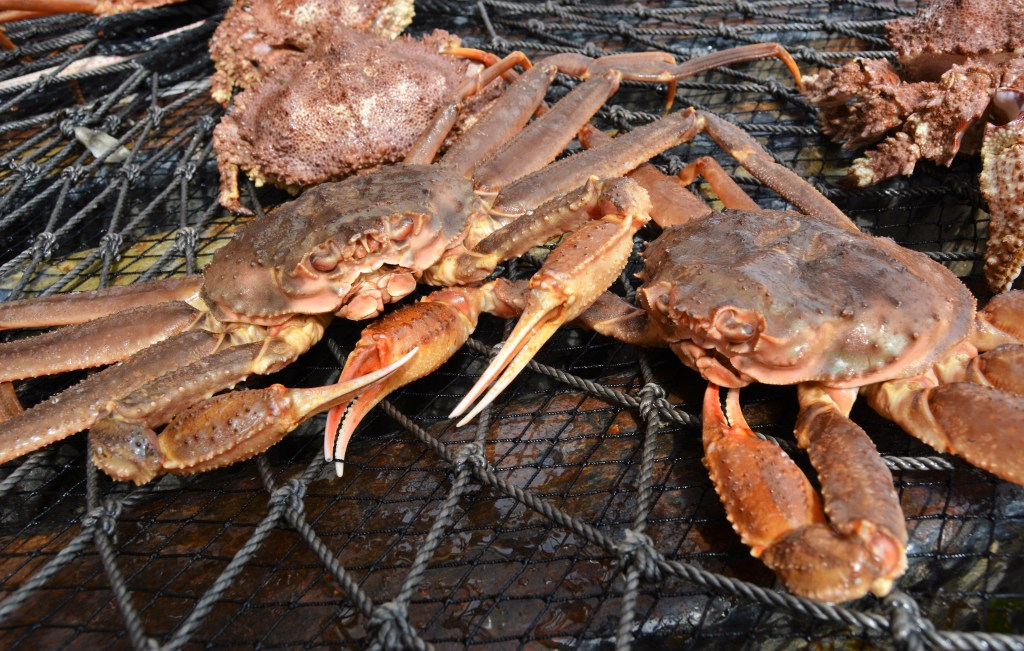 Snow Crab in net