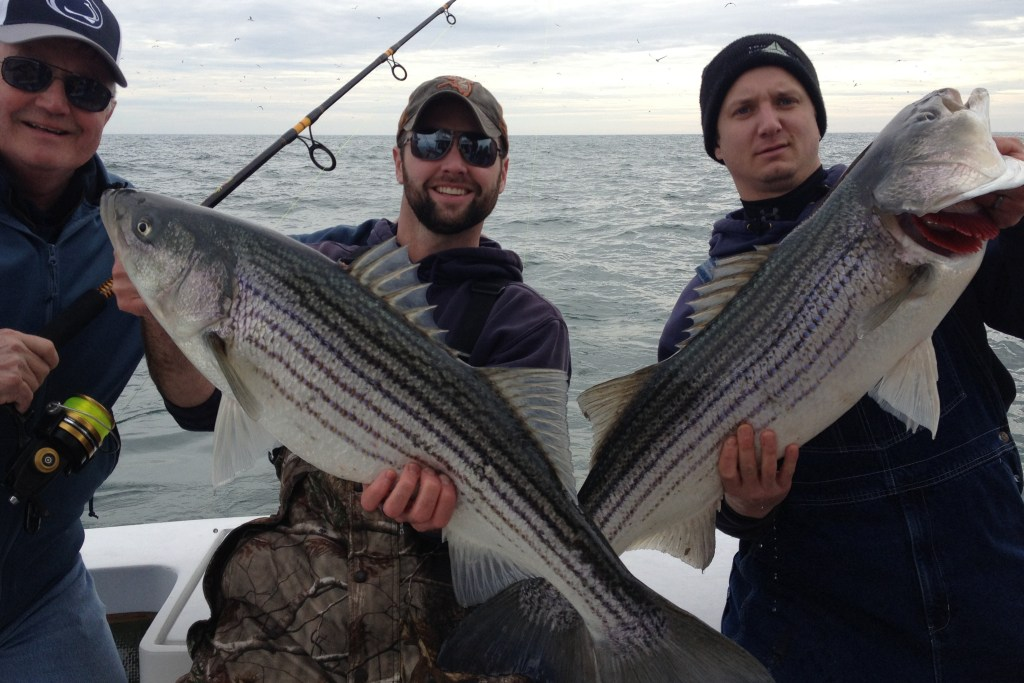 Three anglers holding Striped Bass on a boat