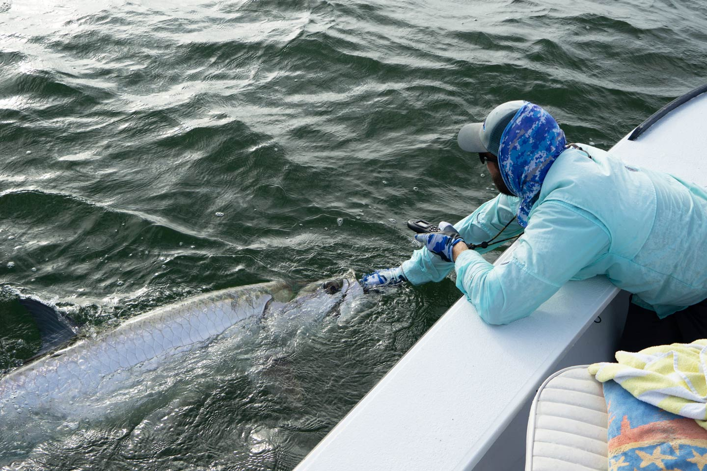 Male angler holding Tarpon in backcountry waters of New Smyrna Beach