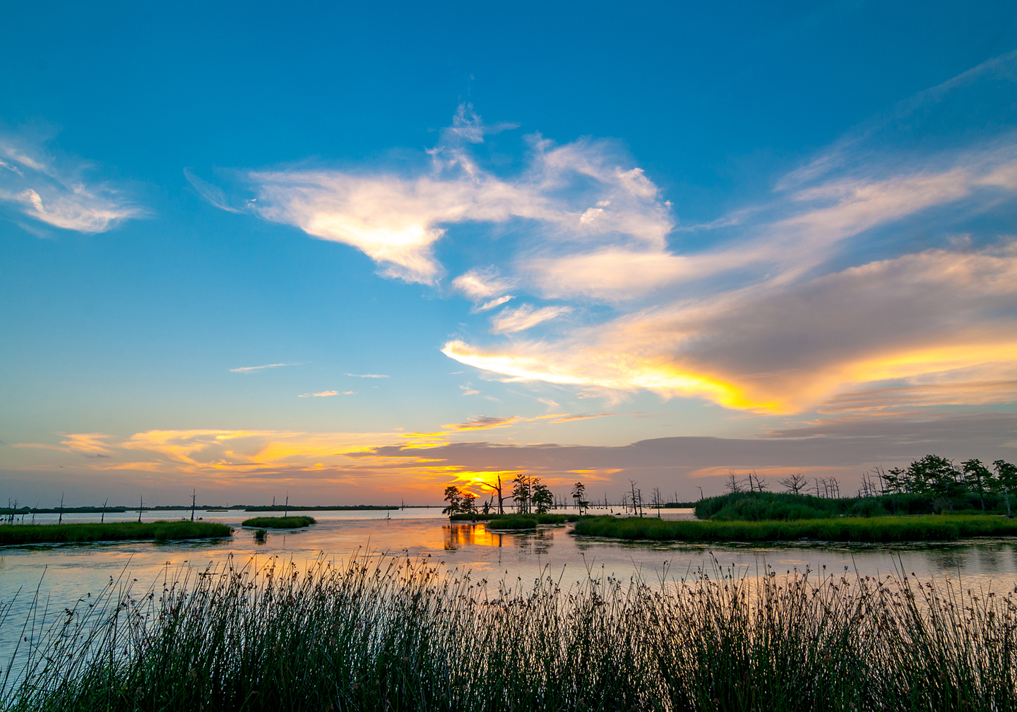 A view of the Louisiana wetlands at sunset, with grass in the foreground, water in the center, and sky in the distance.