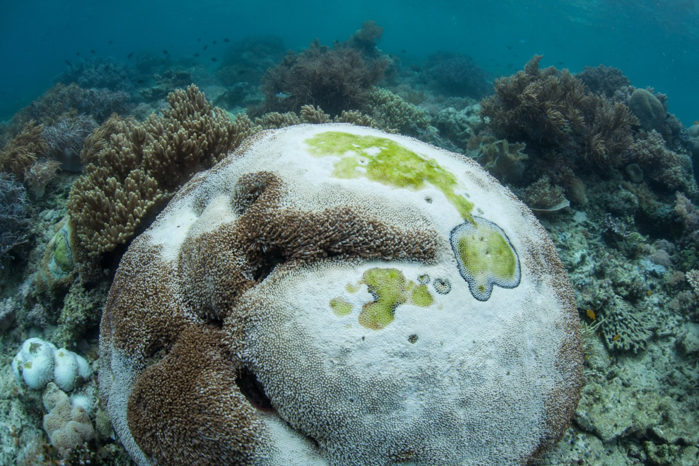 a deceased coral formation