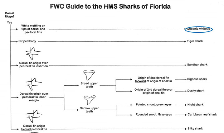 Destin Fishing Rodeo Shark Saturdays: a FWC guide showing how to recognize legal Shark species in Florida.
