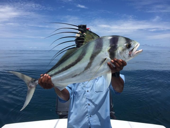 Angler in a blue shirt holding up a Roosterfish in front of his face