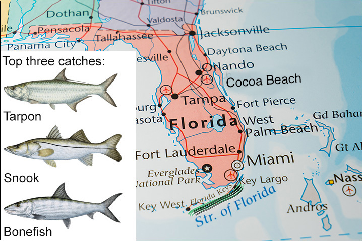 Florida map showing Florida Keys and best fish to target there: Tarpon, Snook, and Bonefish